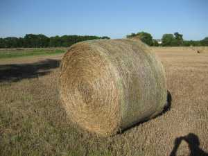 Brome Round Bales Hay for Sale in Kansas 2013